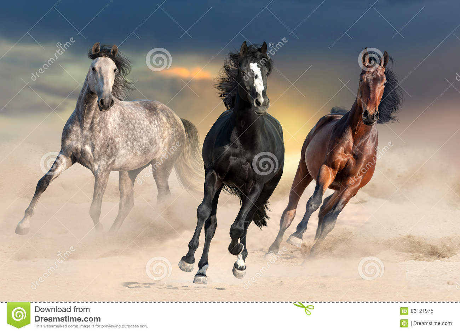 Cavallo in polvere