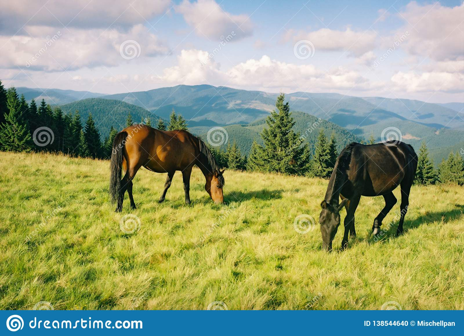 Cavallo selvaggio che pasce nelle montagne di estate