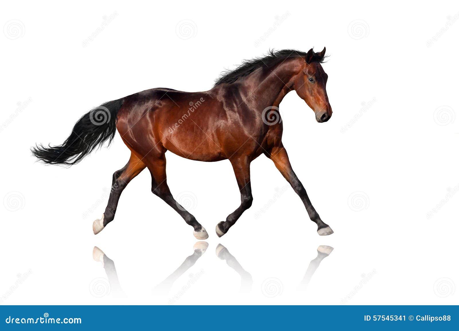 Cavallo su bianco