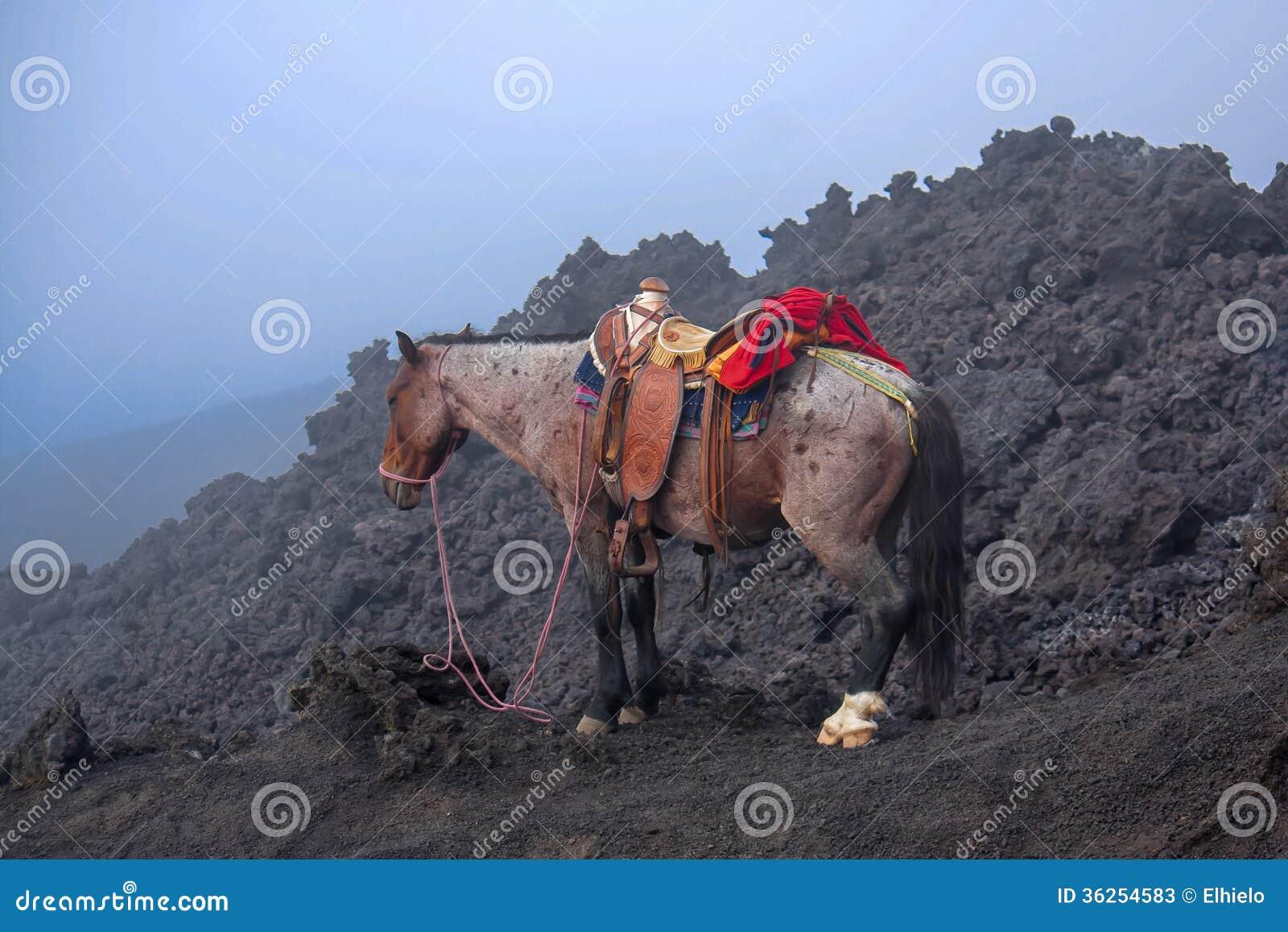 Cavallo sul vulcano di Pacaya