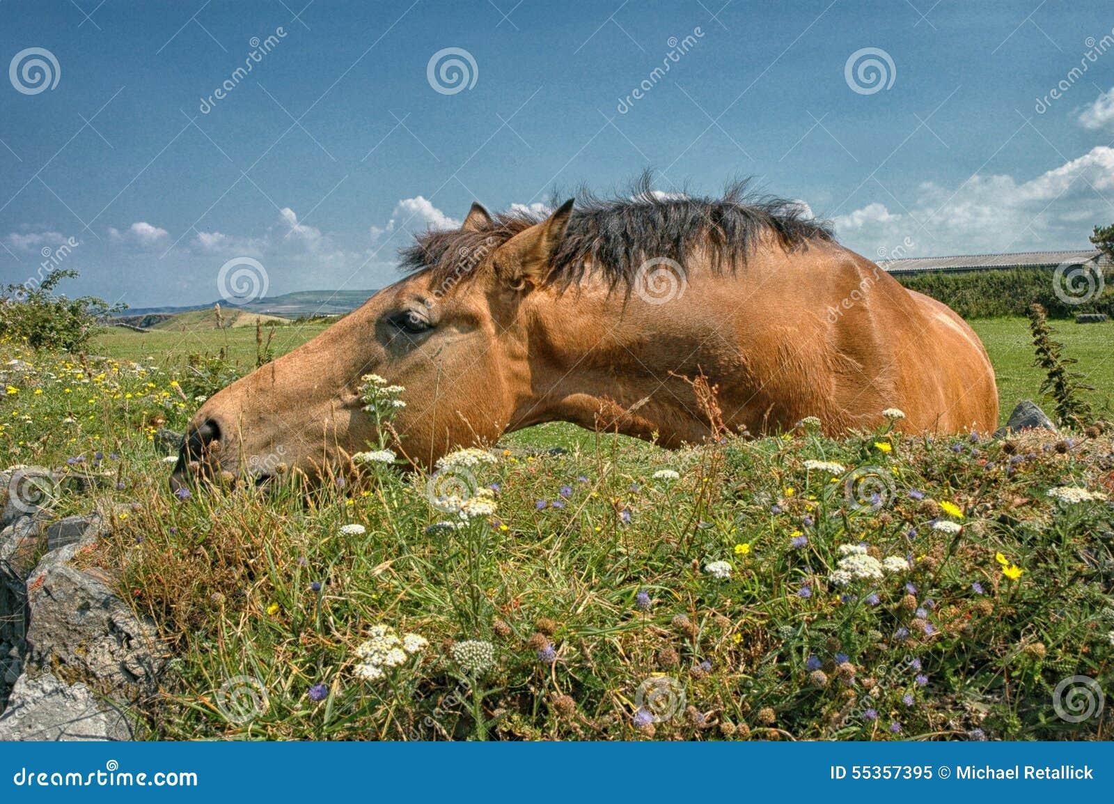 Cavallo a Tintagel Cornovaglia Regno Unito