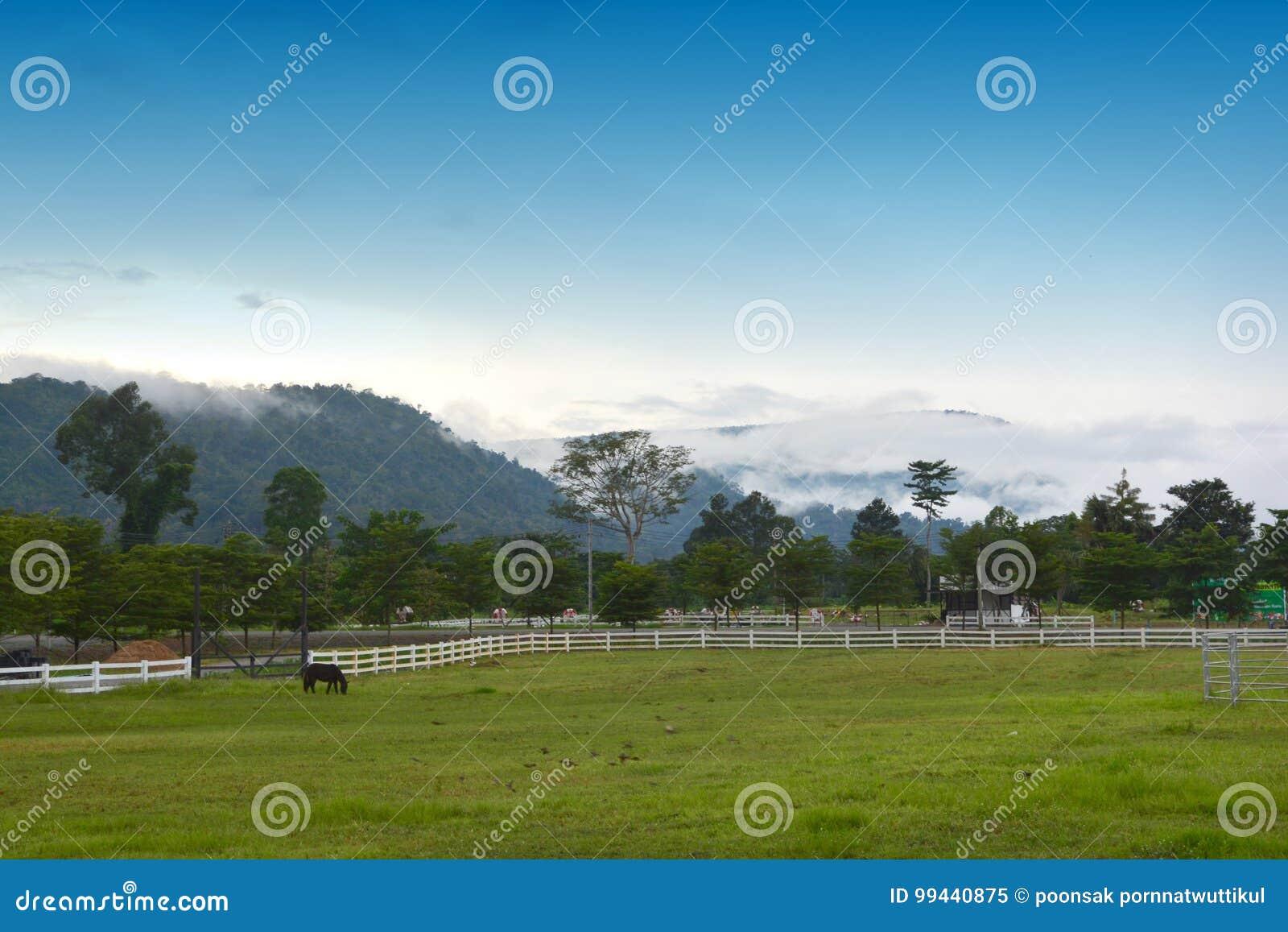 Cavalo bonito no rancho