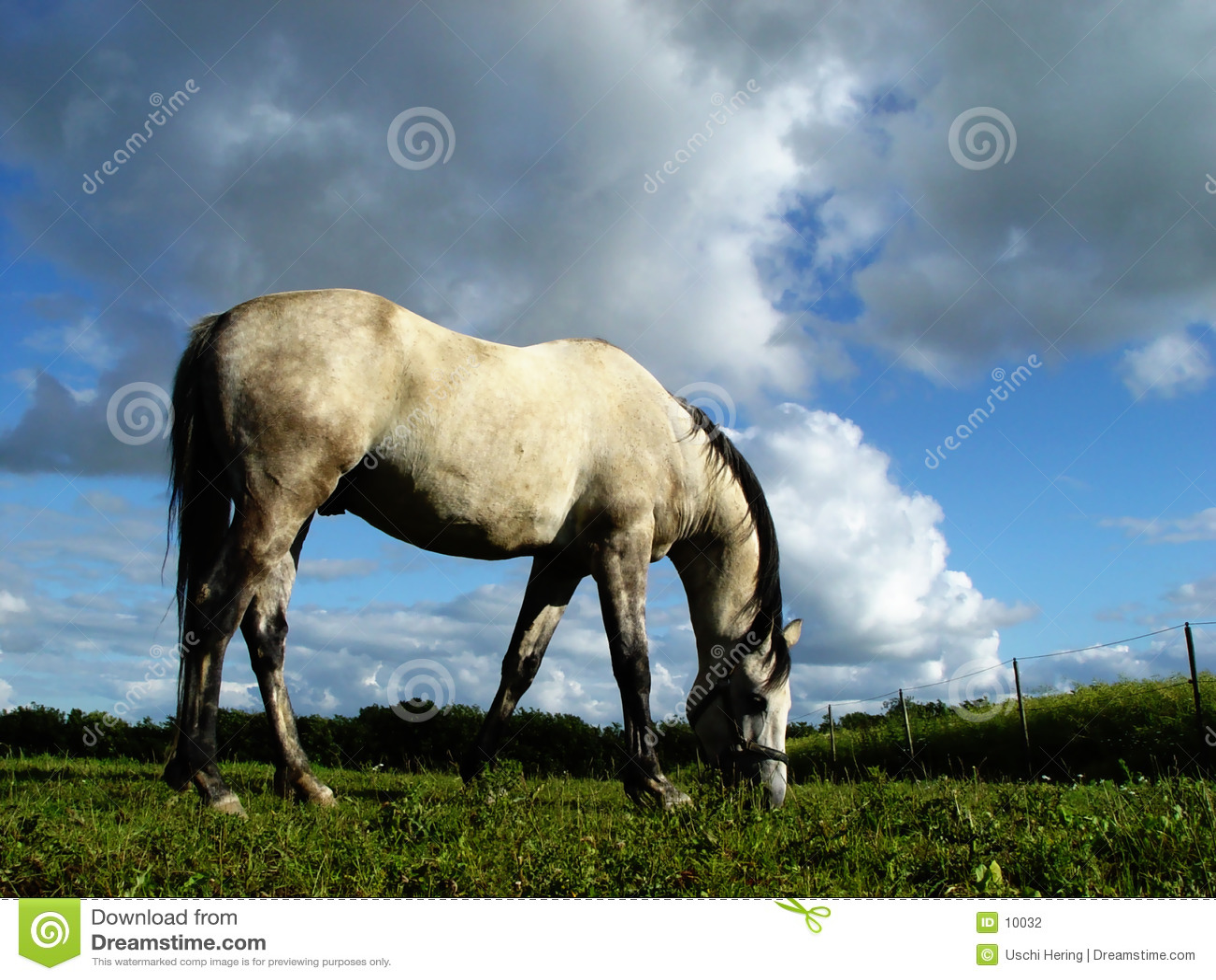 Cavalo branco 2