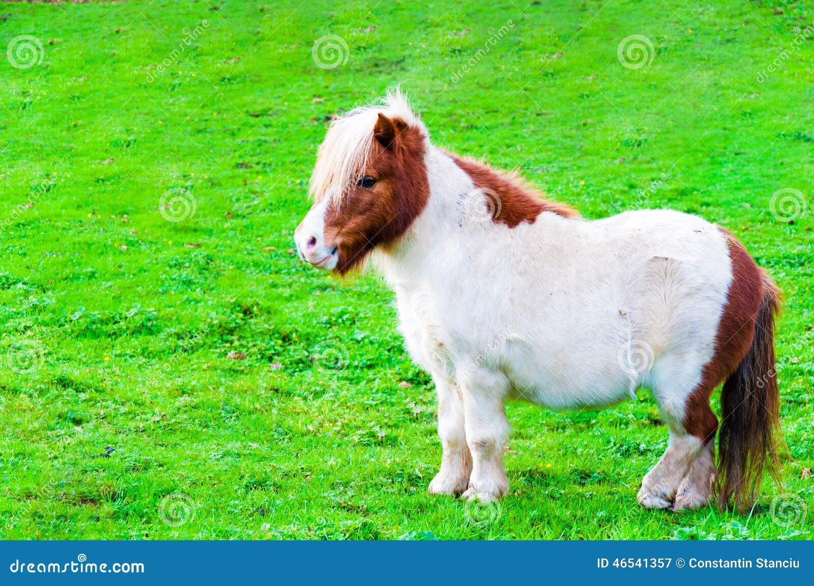 Cavalo castanhas branco de