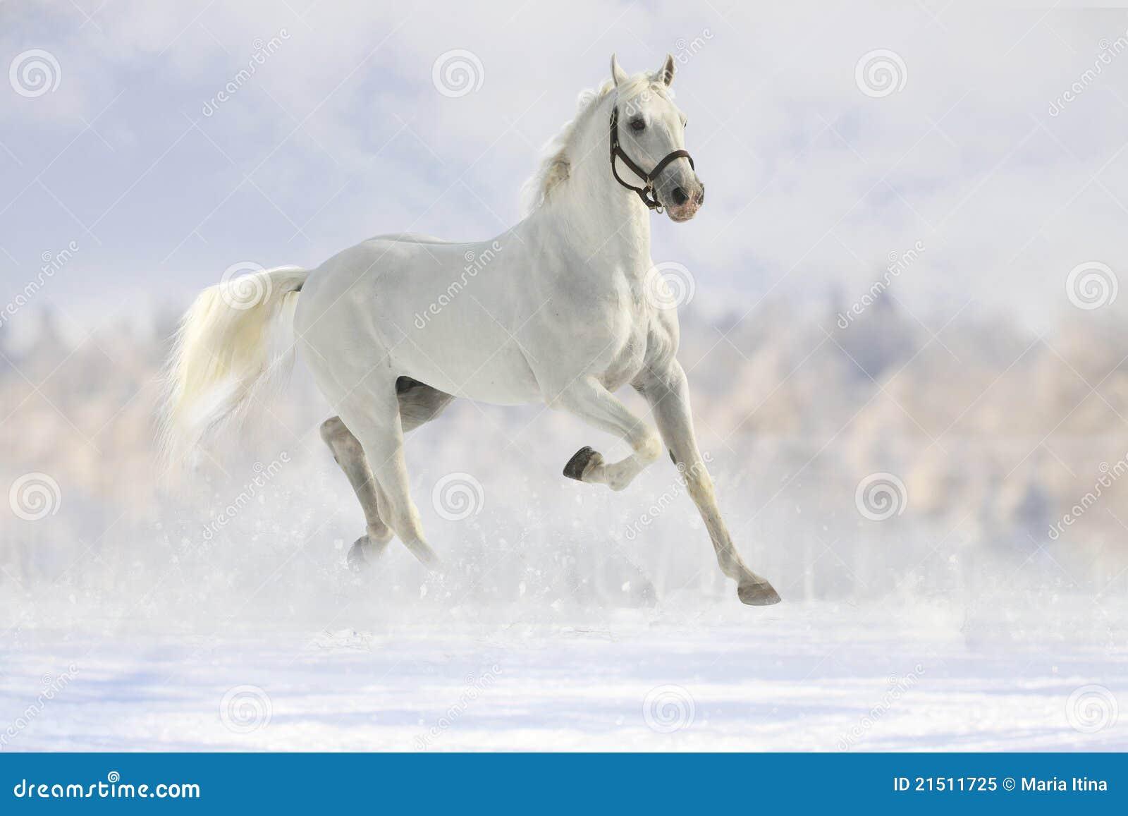 Cavalo branco na neve