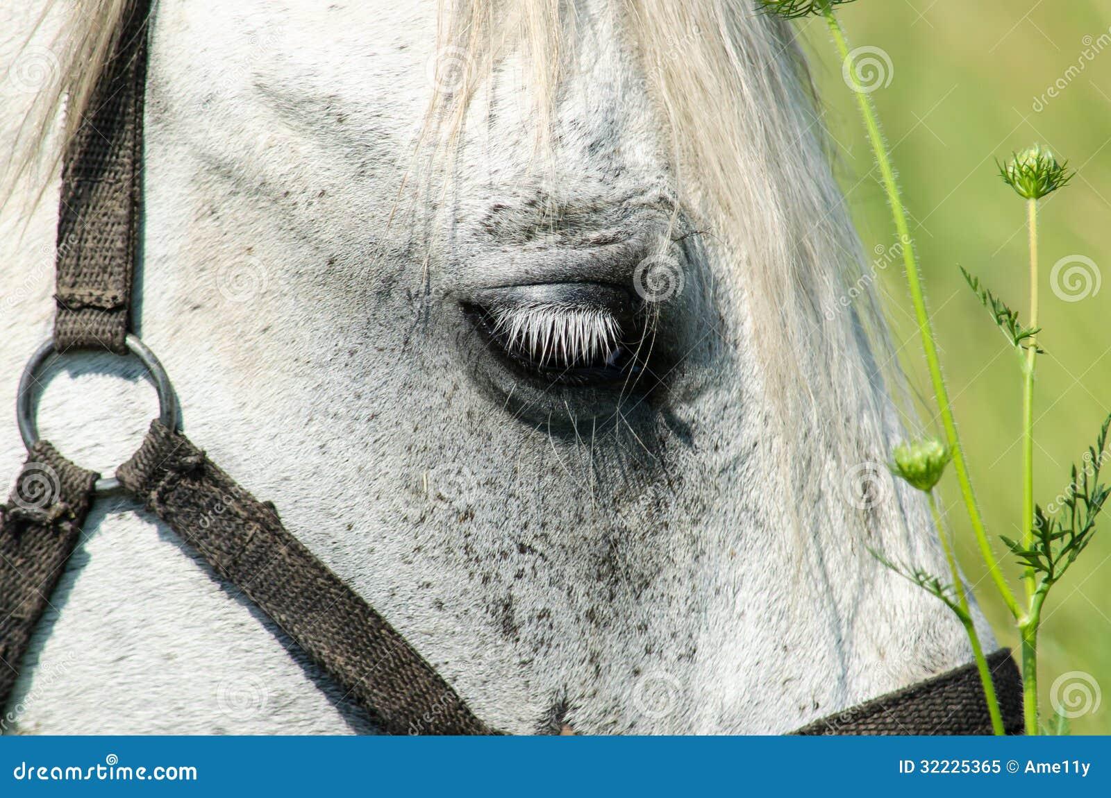 Download Cavalo Branco No Campo Com Girassóis Imagem de Stock - Imagem de alimento, grama: 32225365