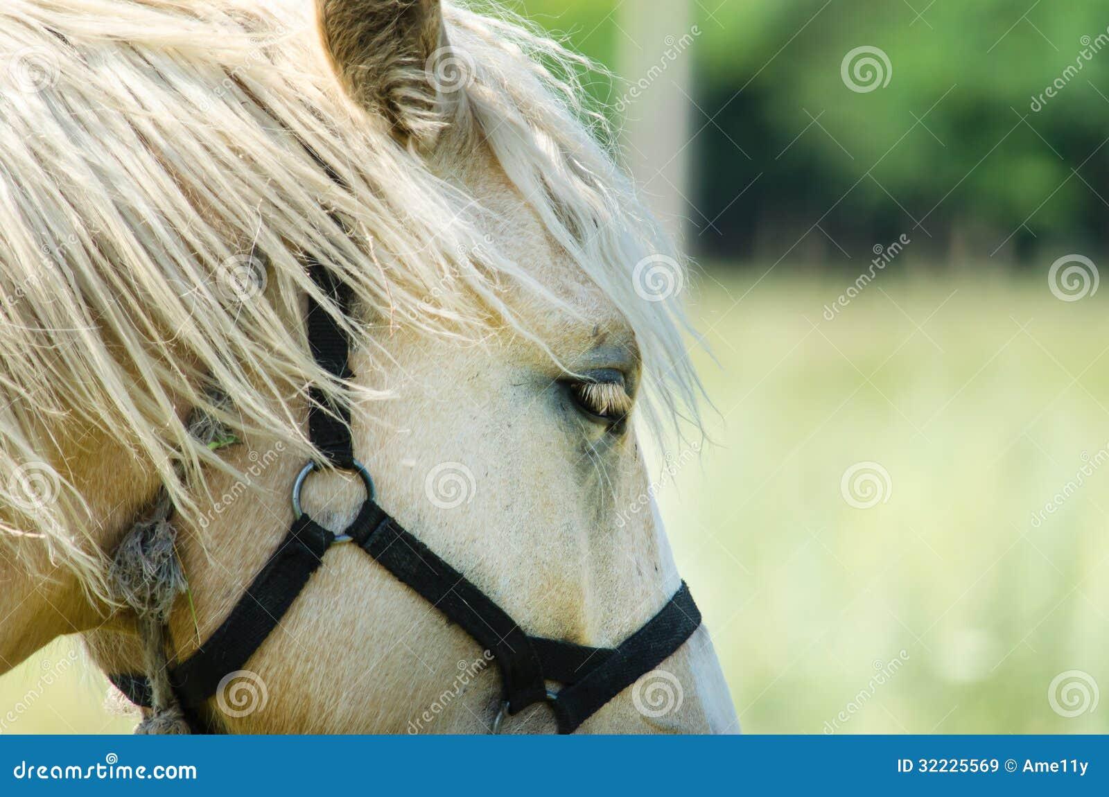 Download Cavalo Branco No Campo Com Girassóis Imagem de Stock - Imagem de campo, animais: 32225569