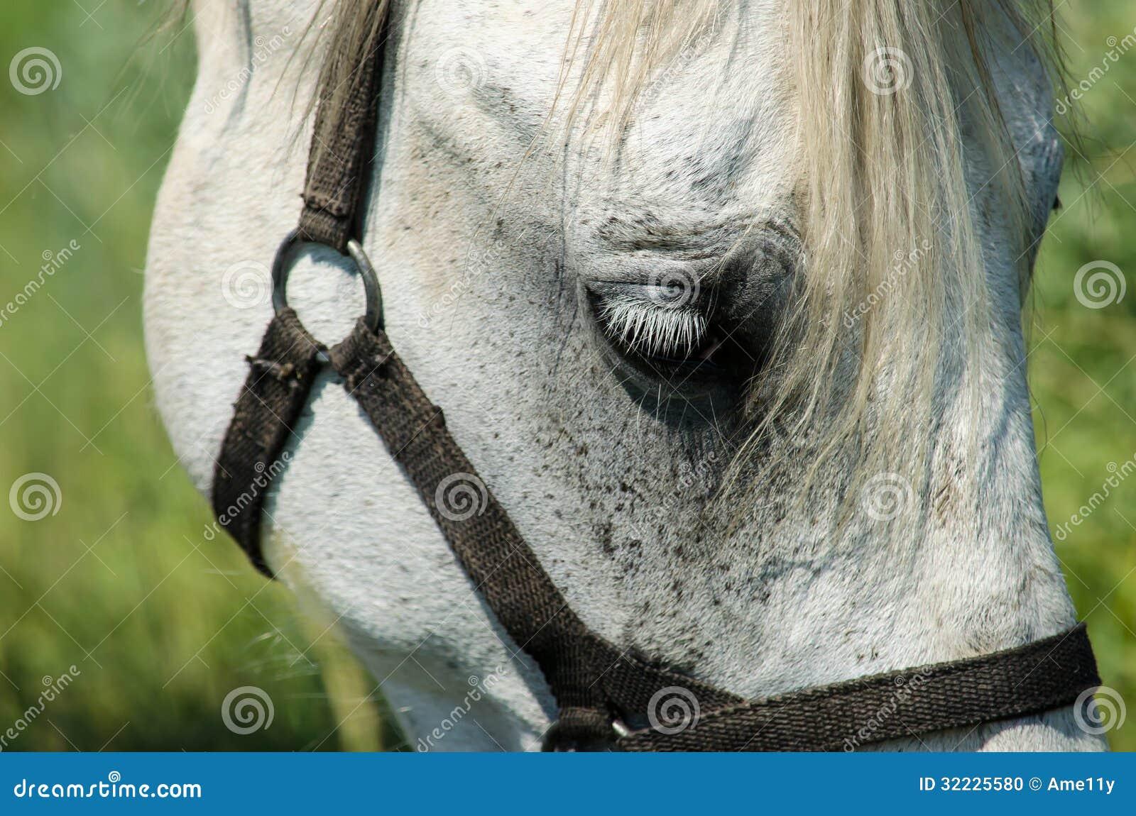 Download Cavalo Branco No Campo Com Girassóis Foto de Stock - Imagem de pets, bonito: 32225580