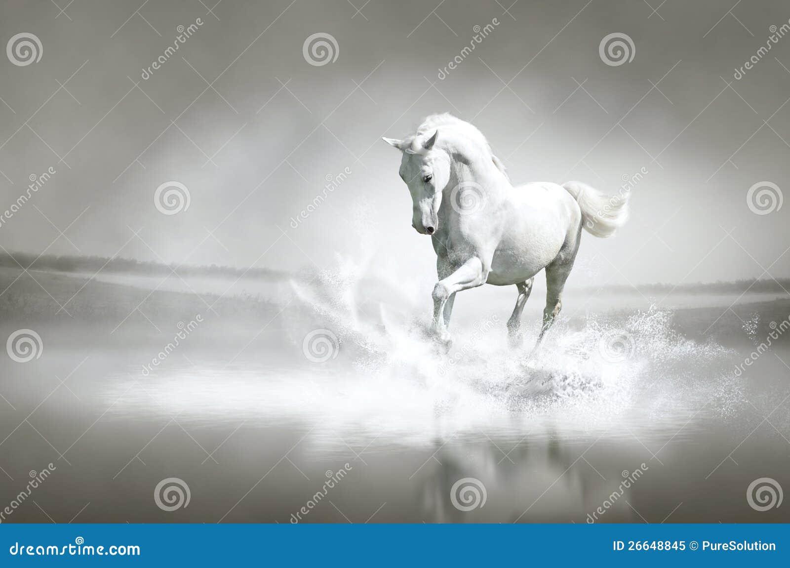 Cavalo branco que funciona através da água
