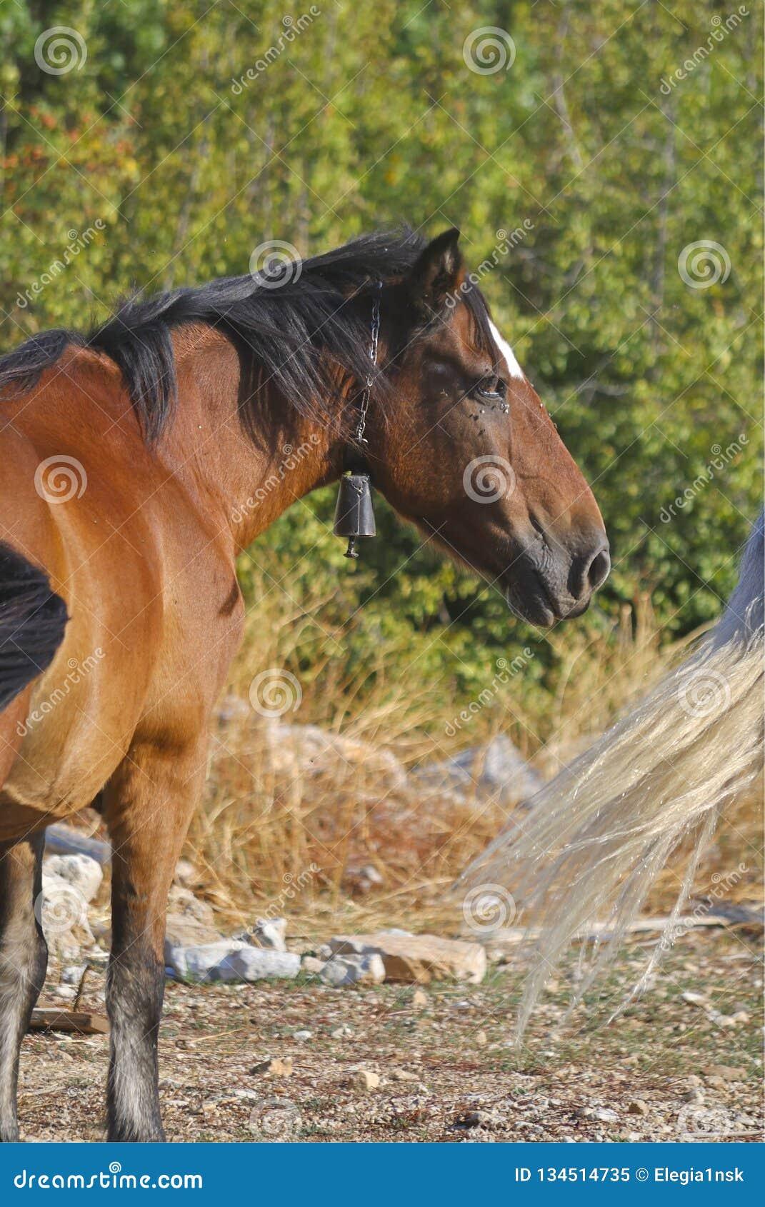 Cavalo de Brown no pasto