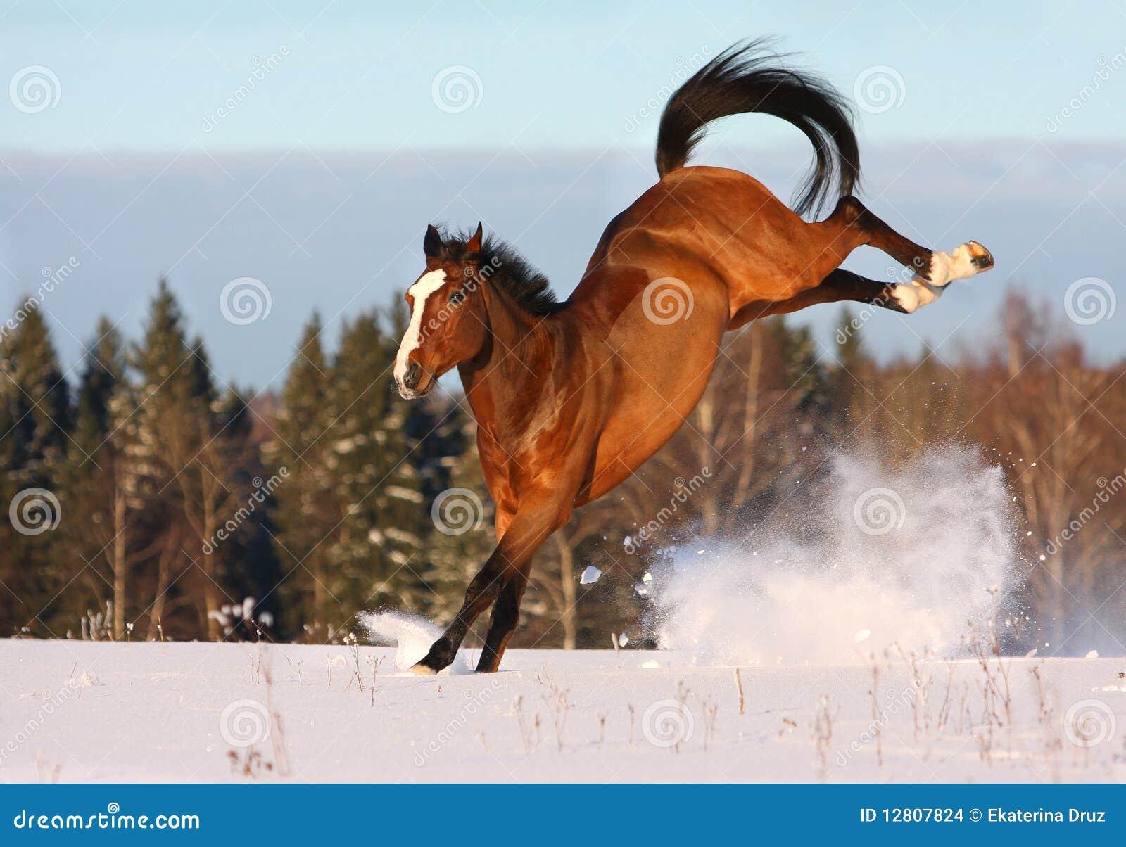 Cavalo de louro que joga no campo de neve