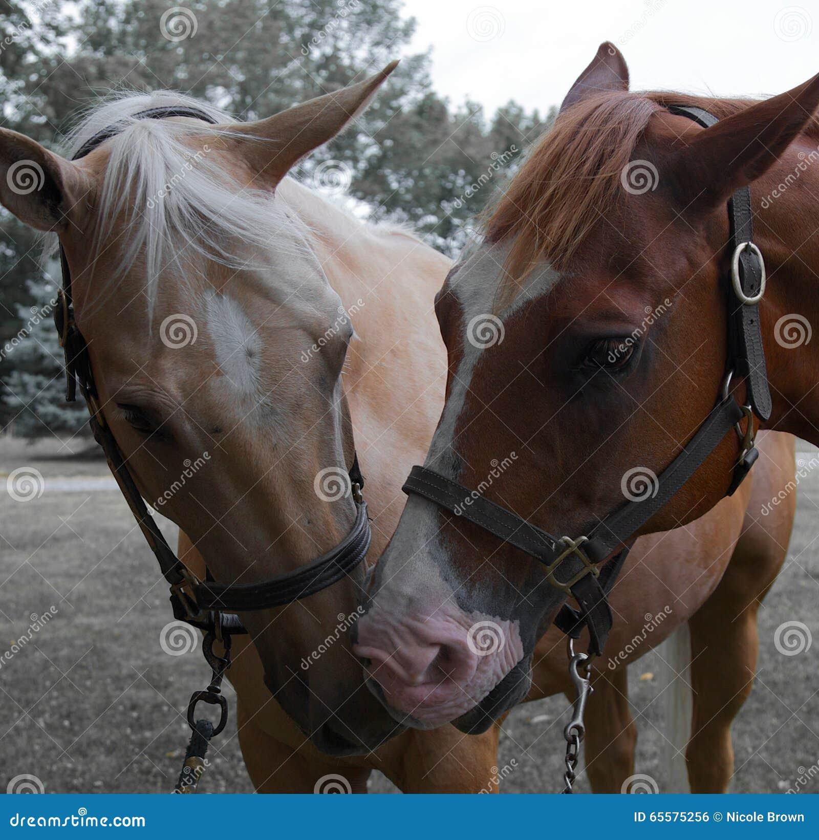 Cavalo de um quarto
