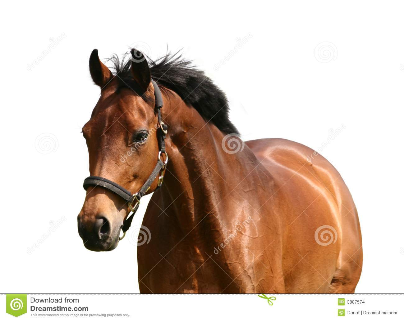 Cavalo dourado