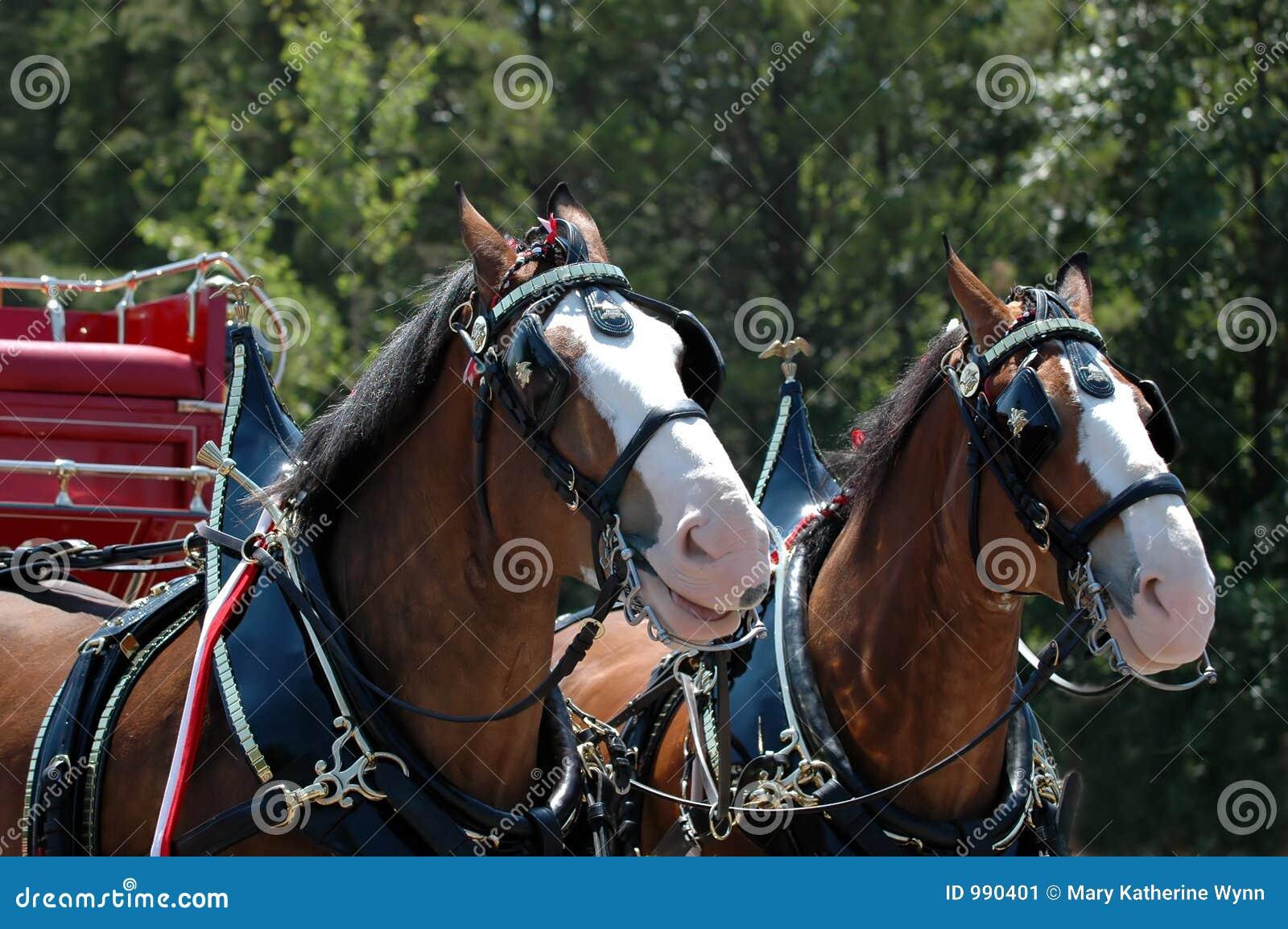 Cavalo e buggy