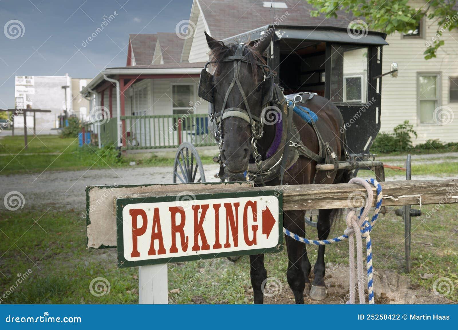Cavalo e buggy do estacionamento
