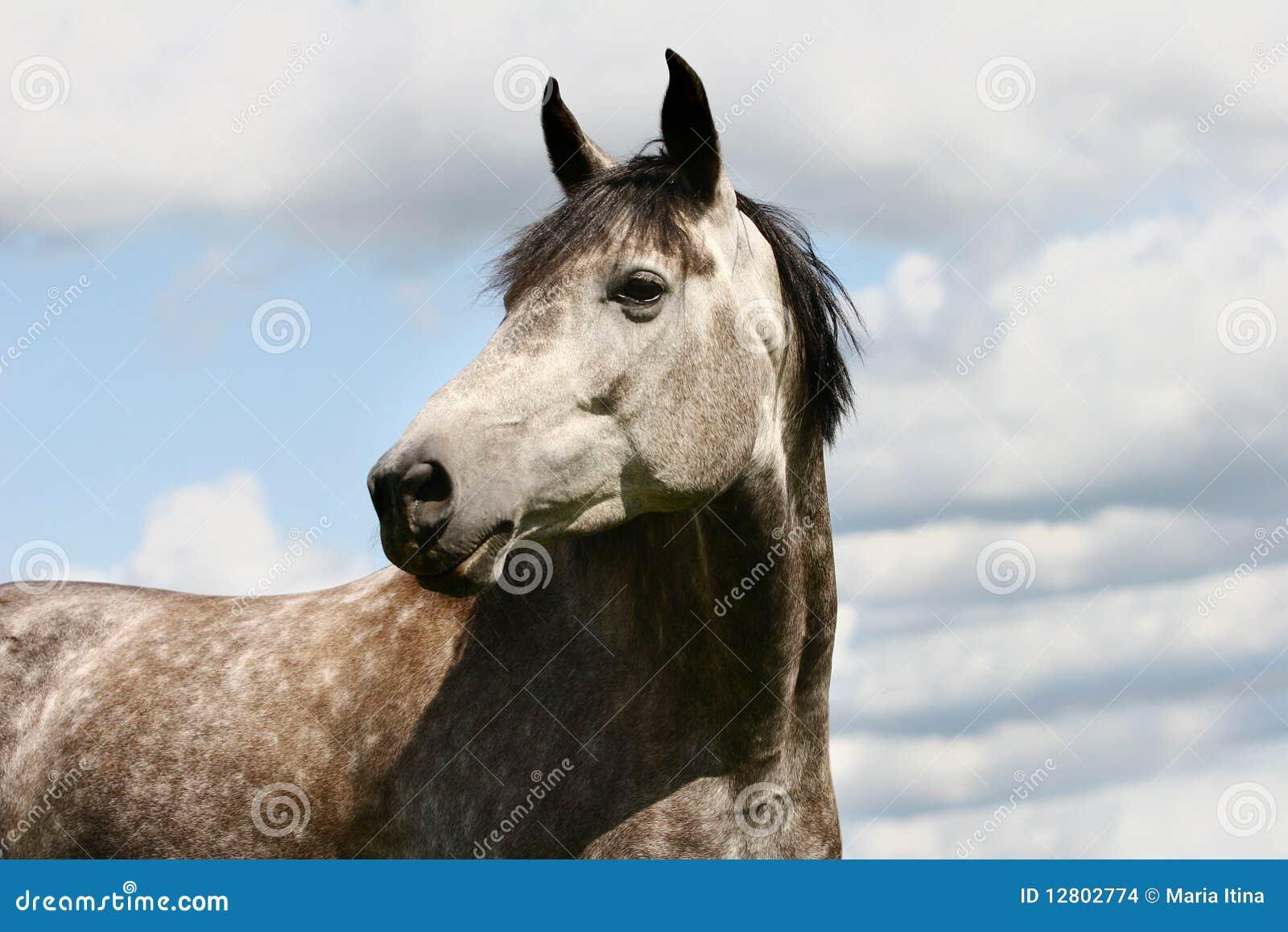 Cavalo e céu