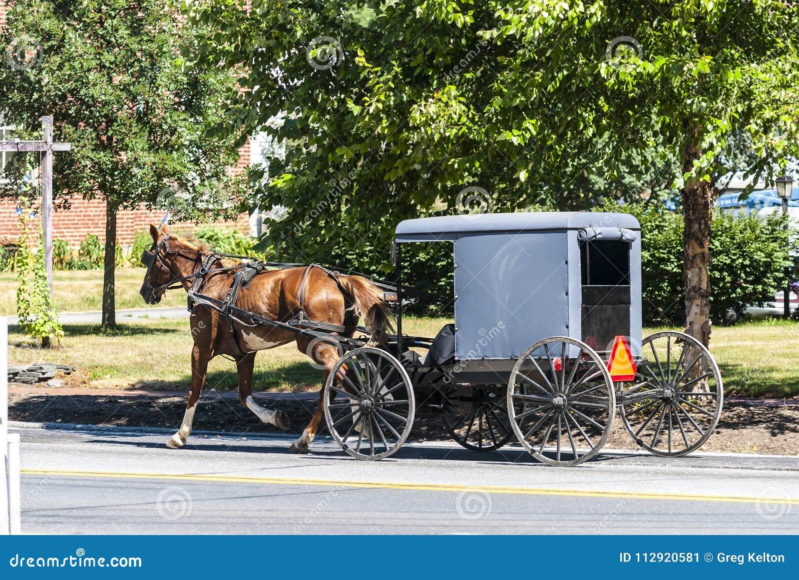 Cavalo e carrinho de Amish em Sunny Summer Day
