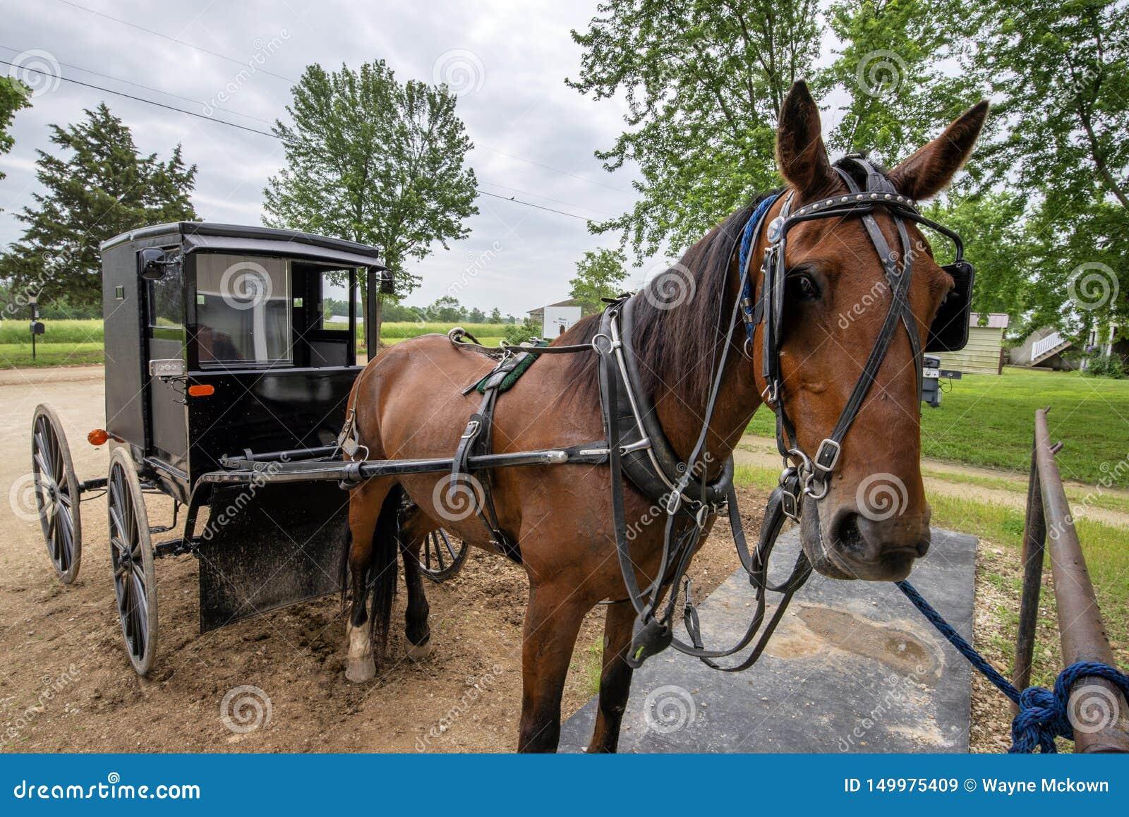 Cavalo e carrinho de Amish, engatados
