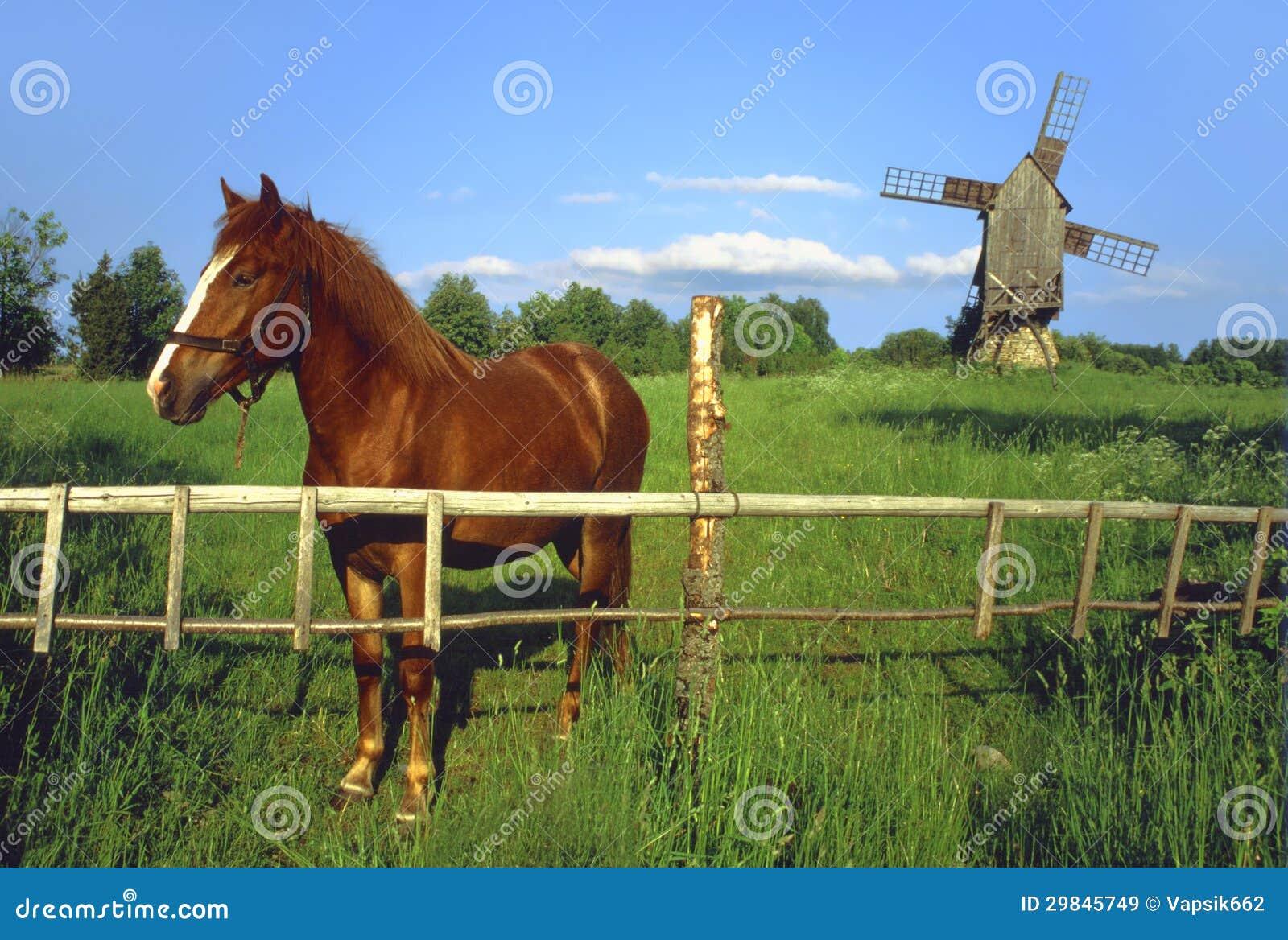 Cavalo com moinho de vento.