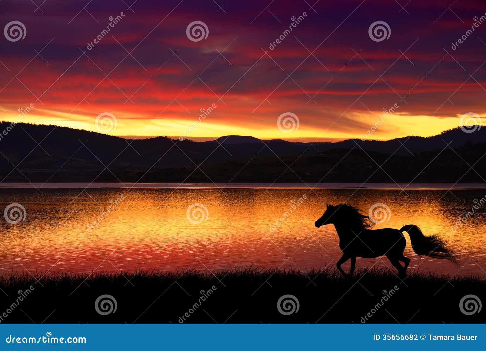 Cavalo e por do sol