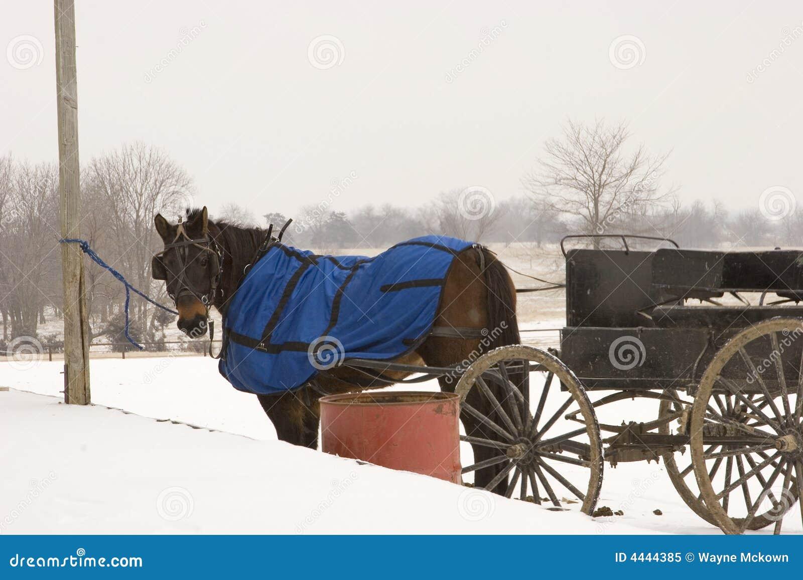 Cavalo e vagão