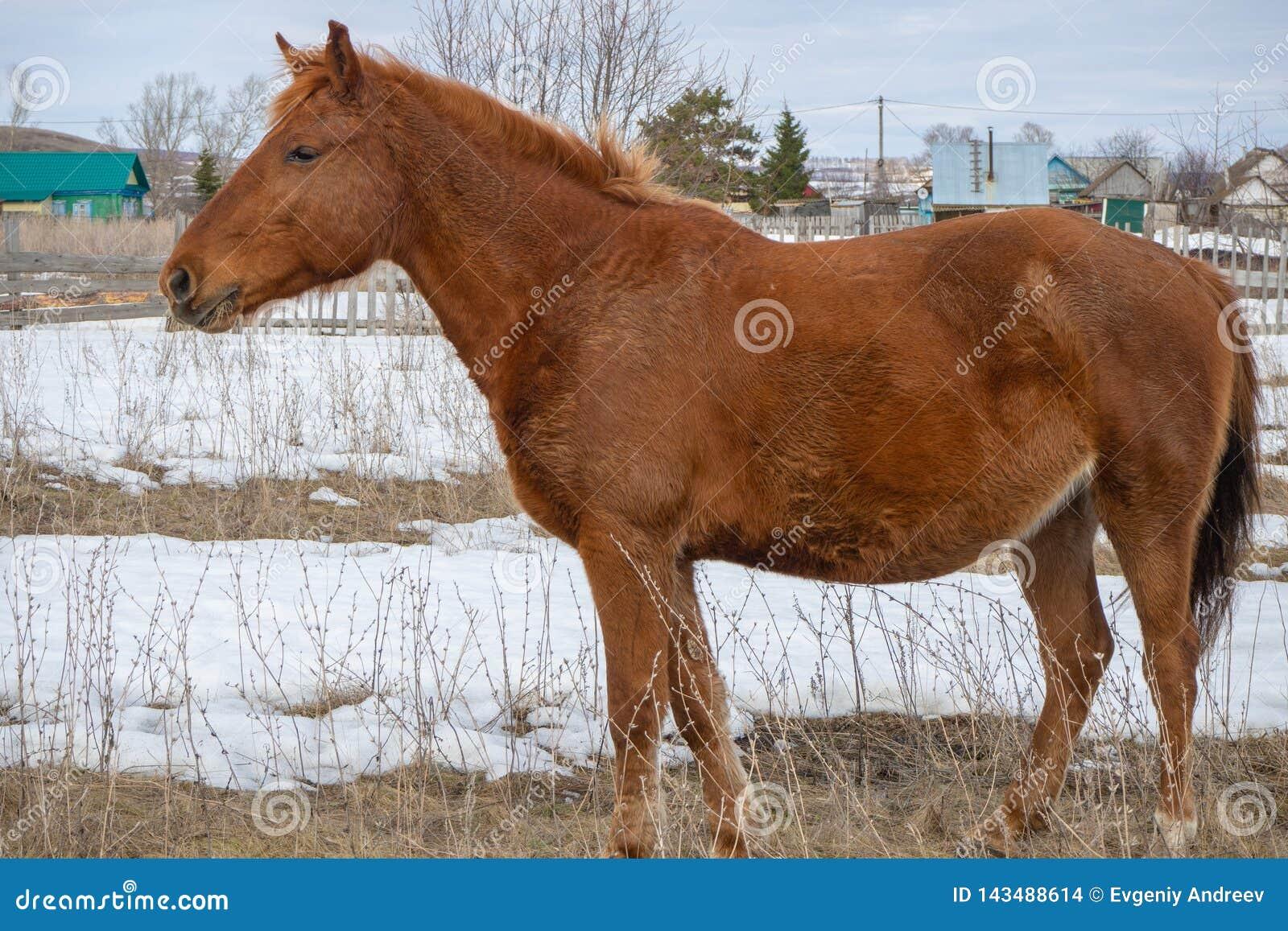 Cavalo ereto isolado