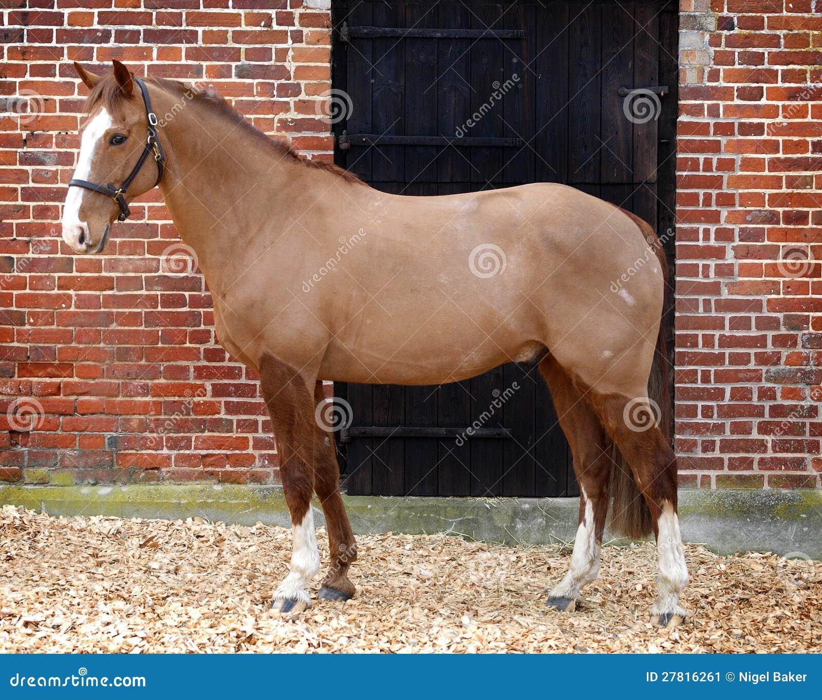 Cavalo inteiramente grampeado