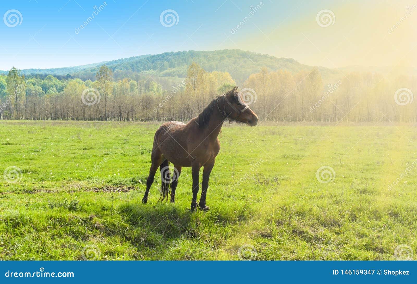 Cavalo marrom bonito que est? apenas no campo verde em um dia de ver?o ensolarado