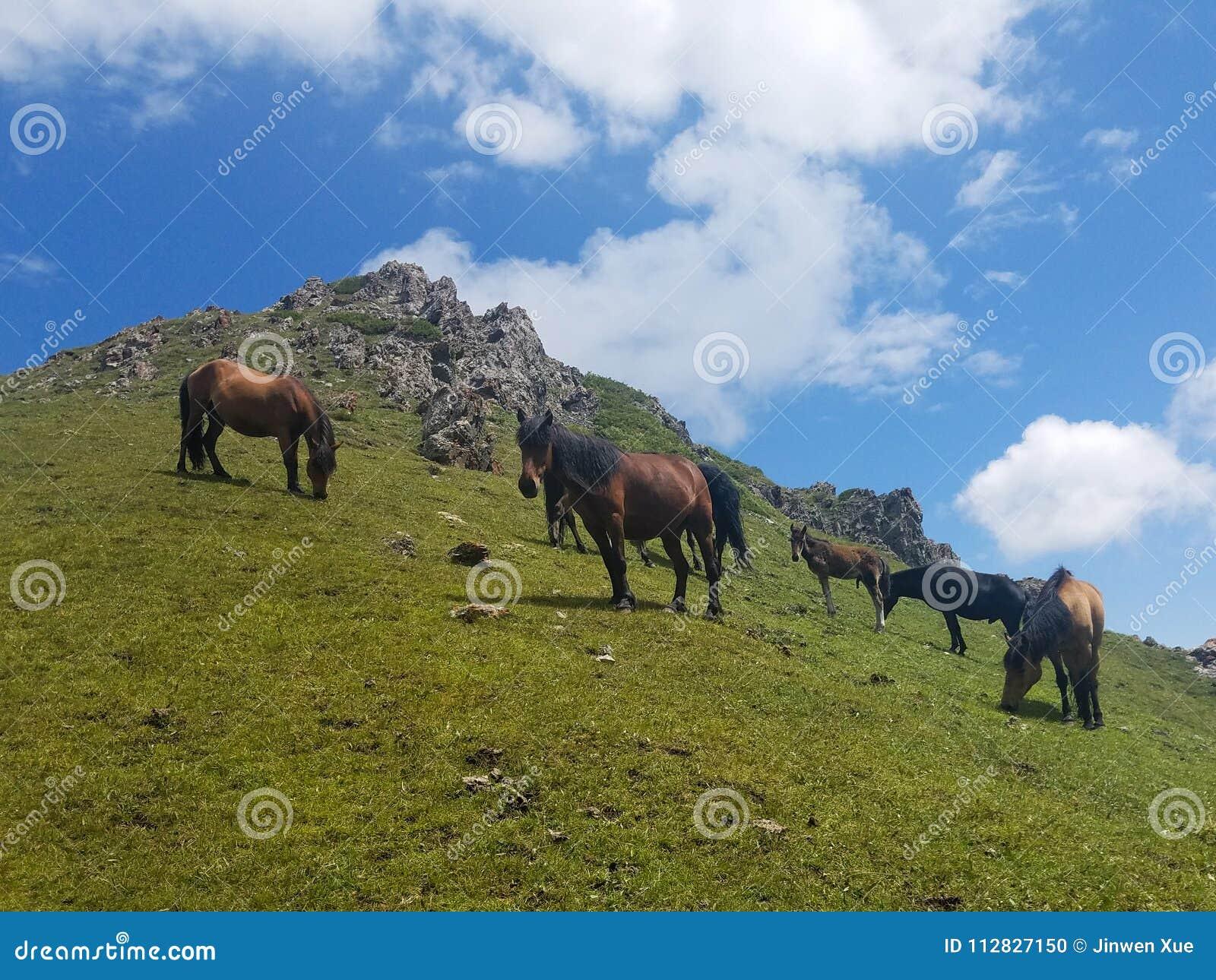 Cavalo, montanha, grama, Wildflowers,