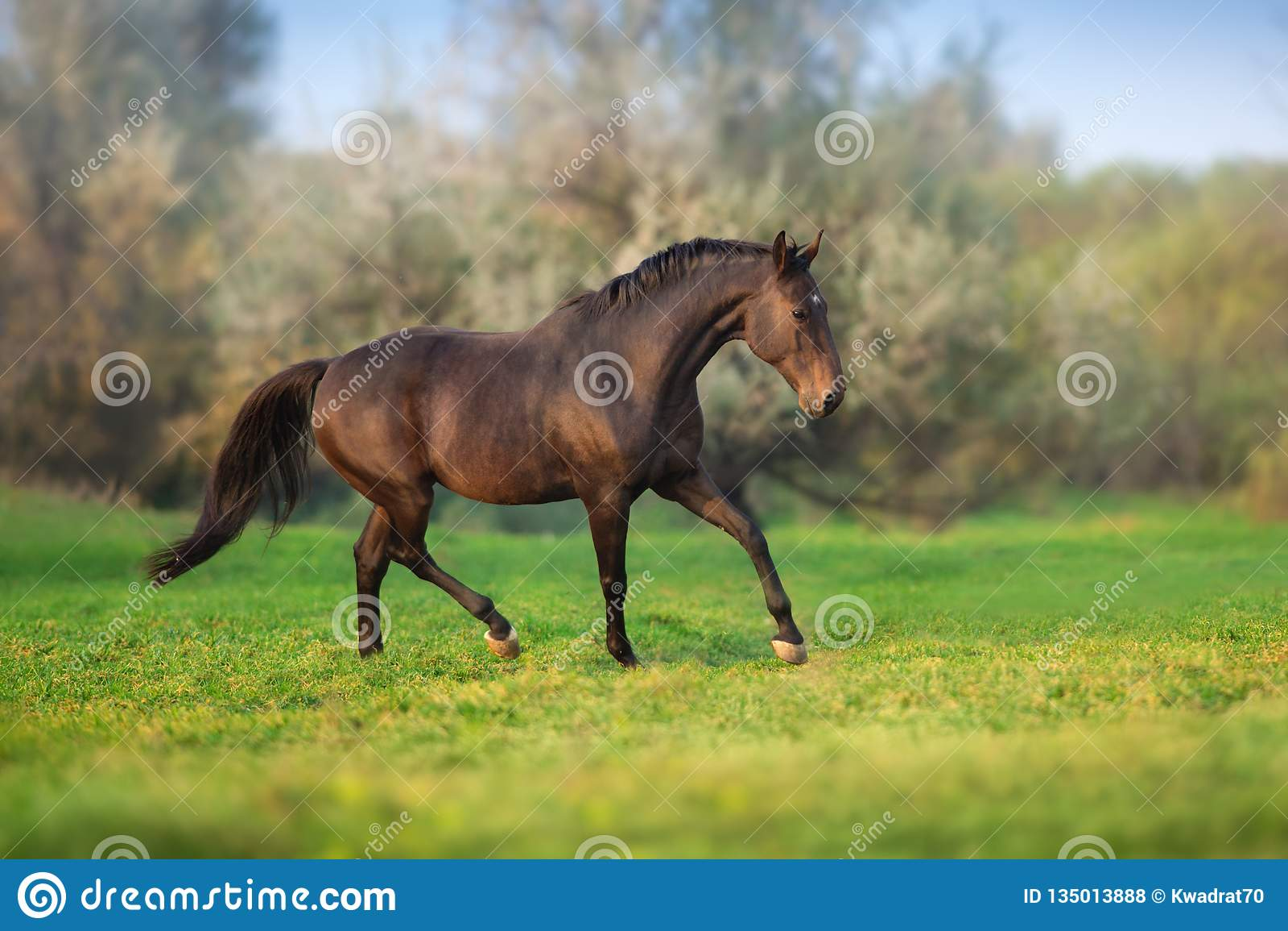 Cavalo no movimento