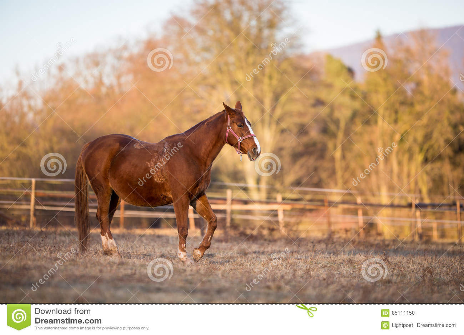 Cavalo no pasto na luz morna da noite