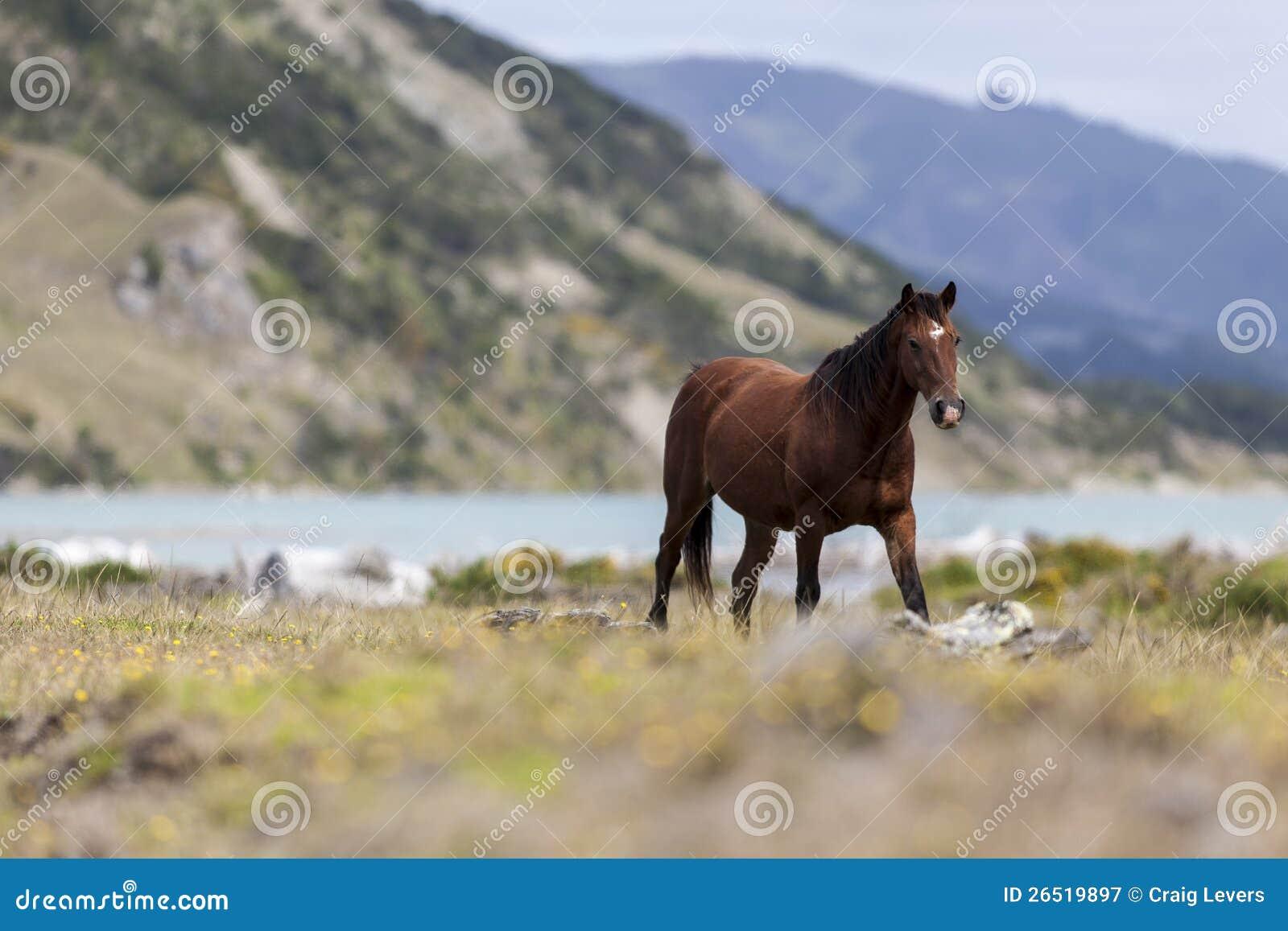 Cavalo no selvagem