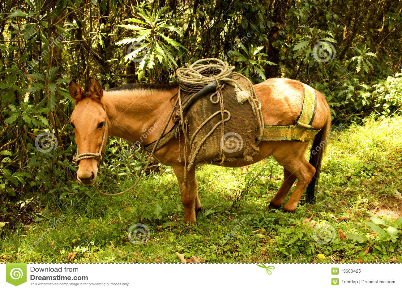 Cavalo no vale de Cocora