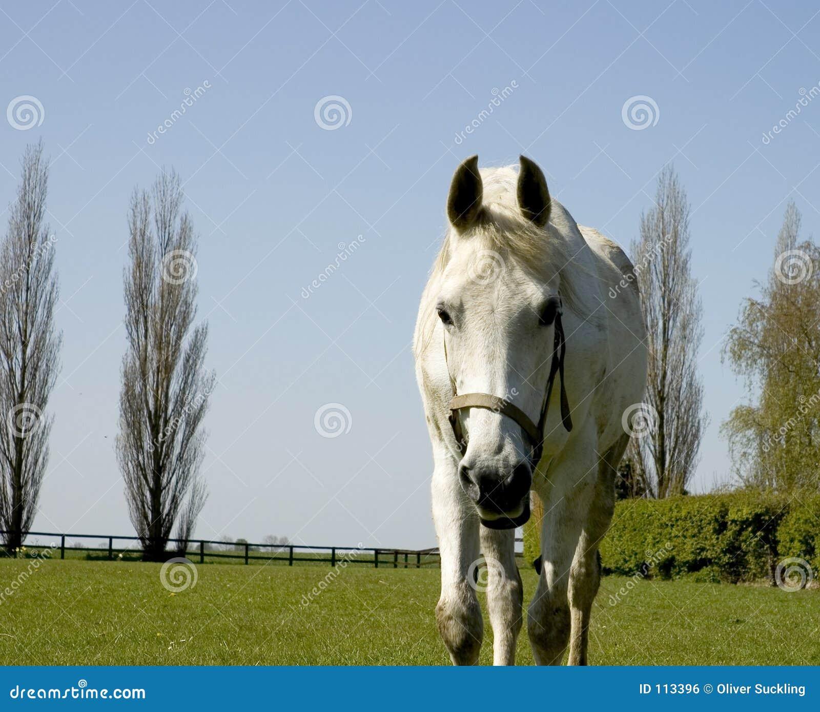 Cavalo próximo