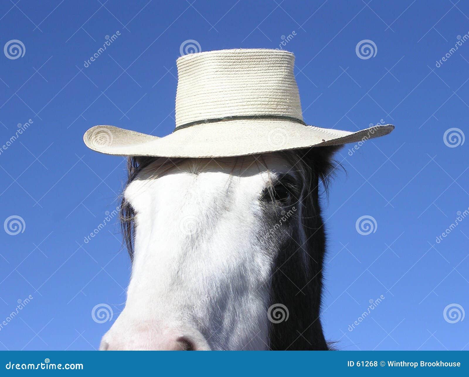 Cavalo que desgasta um chapéu