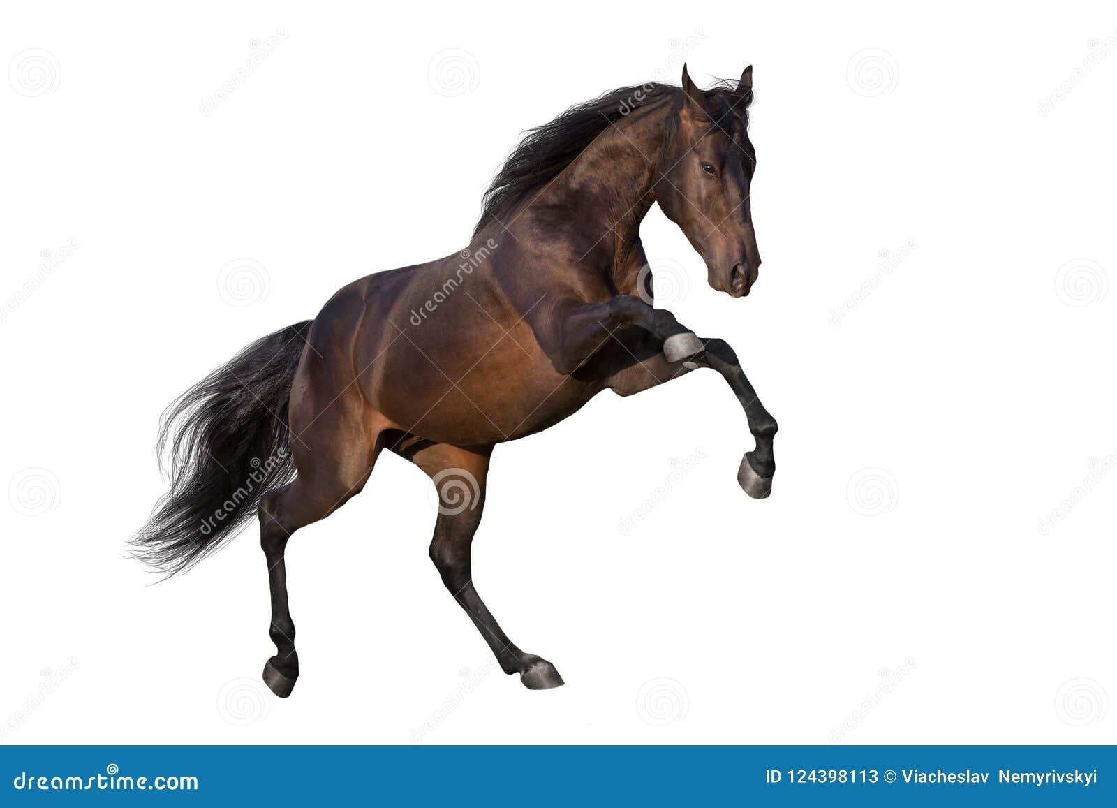 Cavalo que eleva acima do isolado