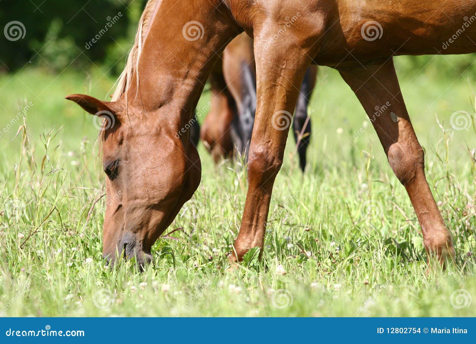 Cavalo que pasta