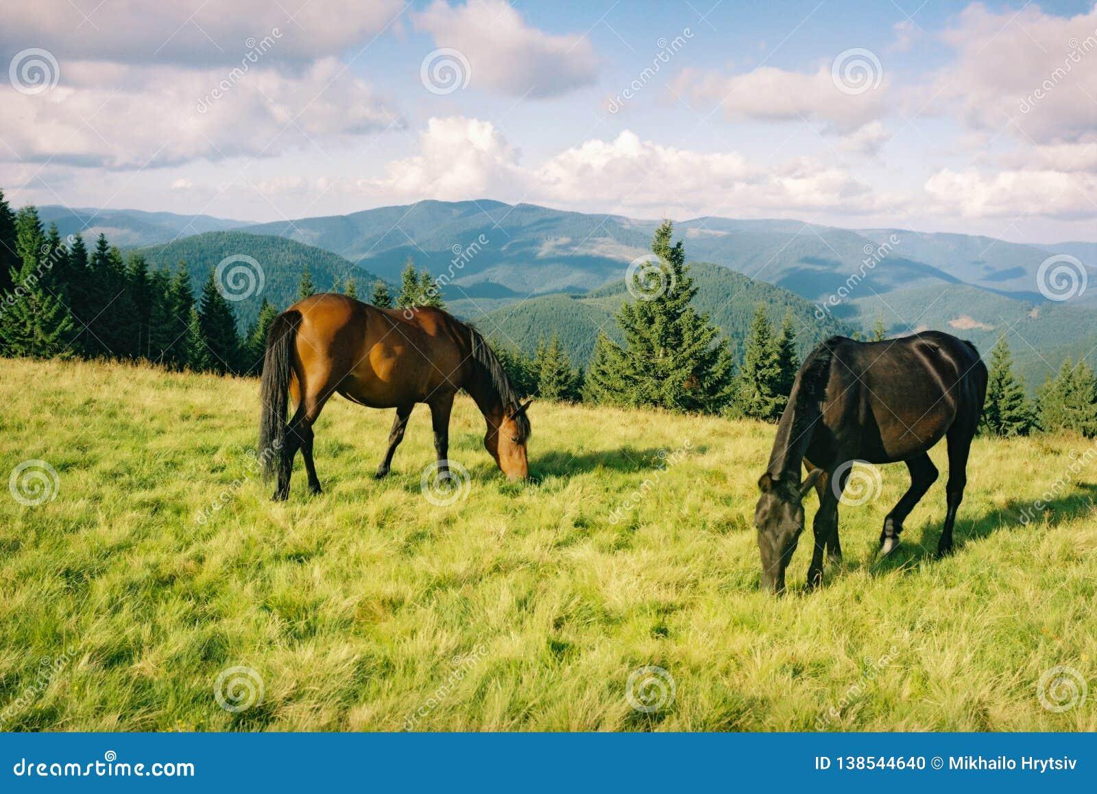 Cavalo selvagem que pasta nas montanhas do verão