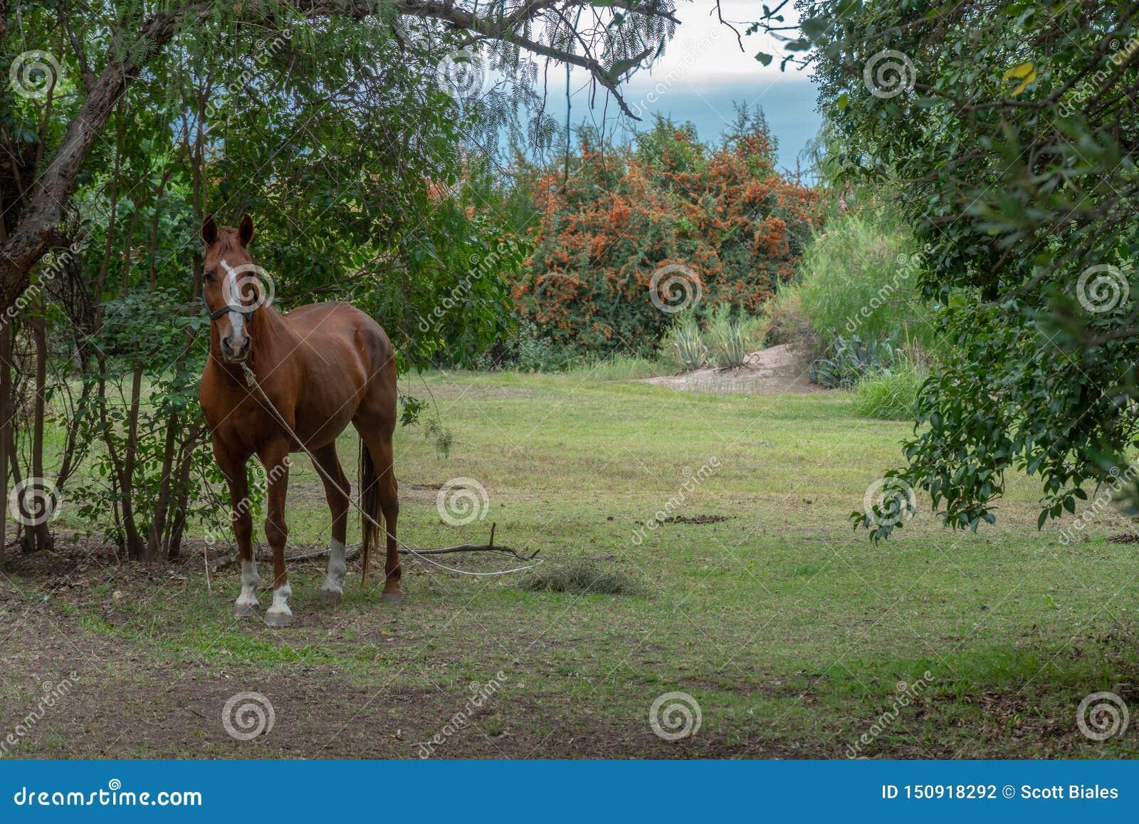 Cavalo solitário no campo