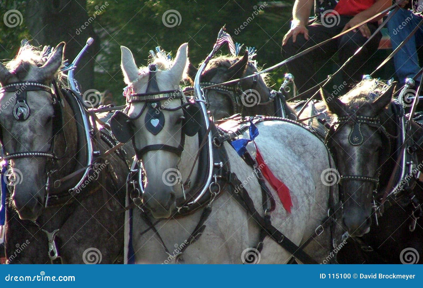 Cavalos da parada