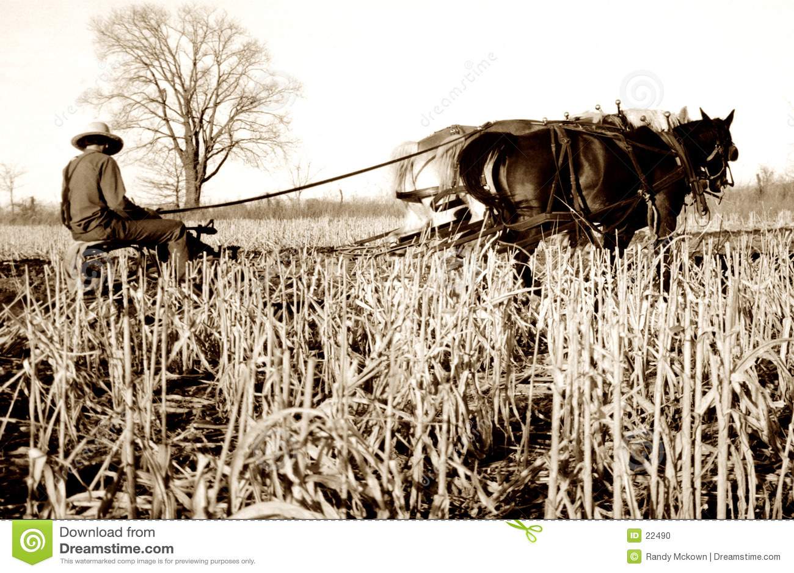 Cavalos de arado de Amish