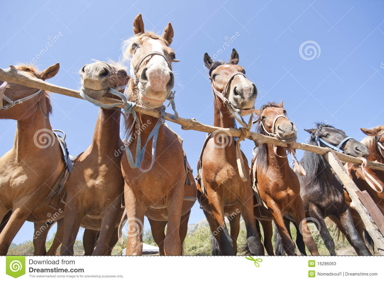 Cavalos de Brown no rancho