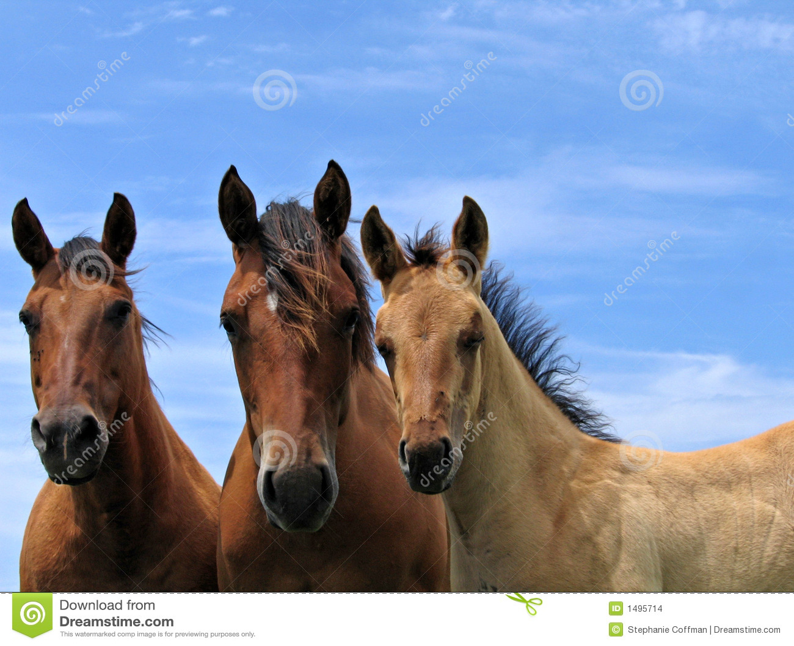 Cavalos de um quarto no pasto
