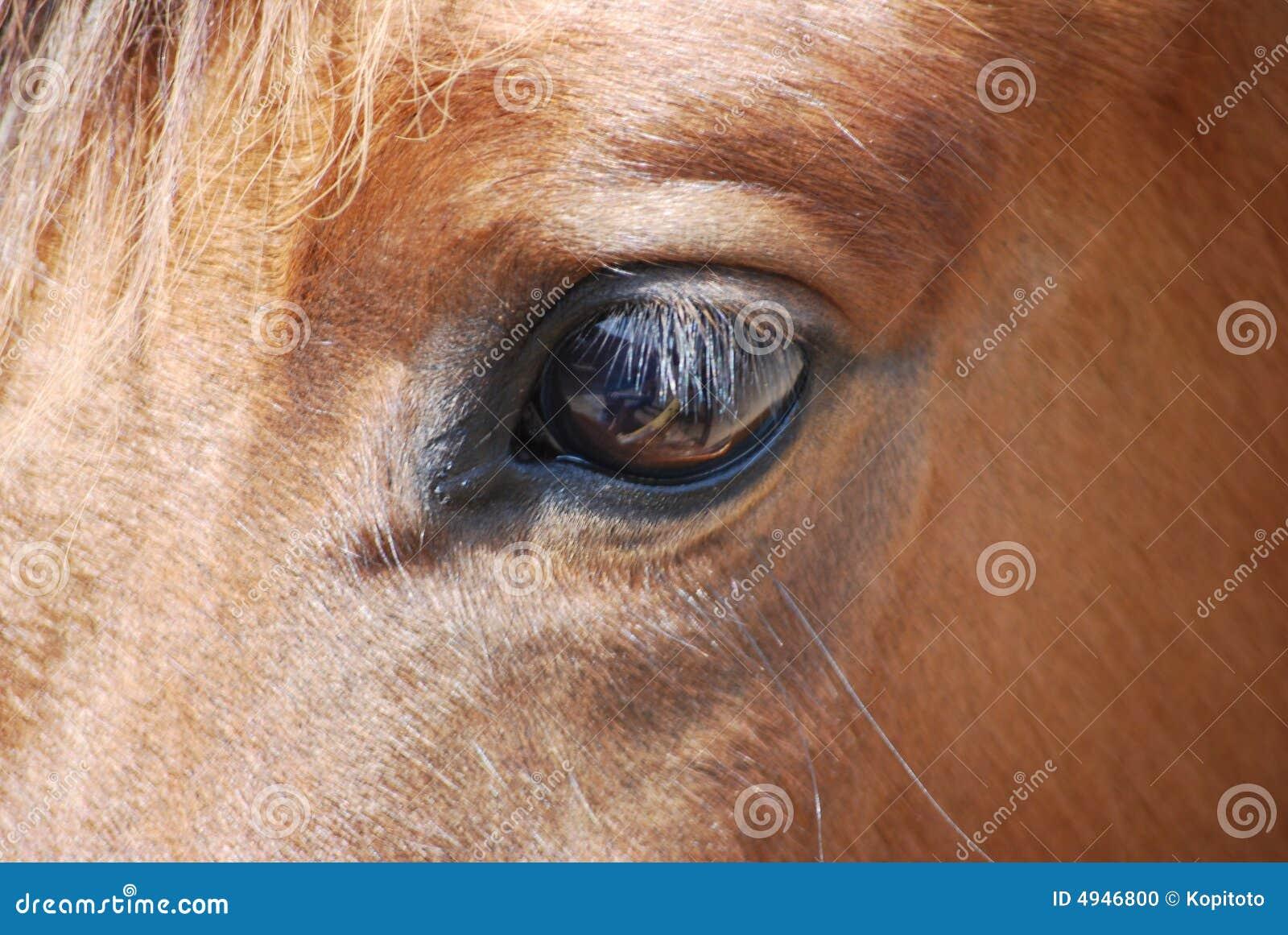 Cavalos do olho e da pestana
