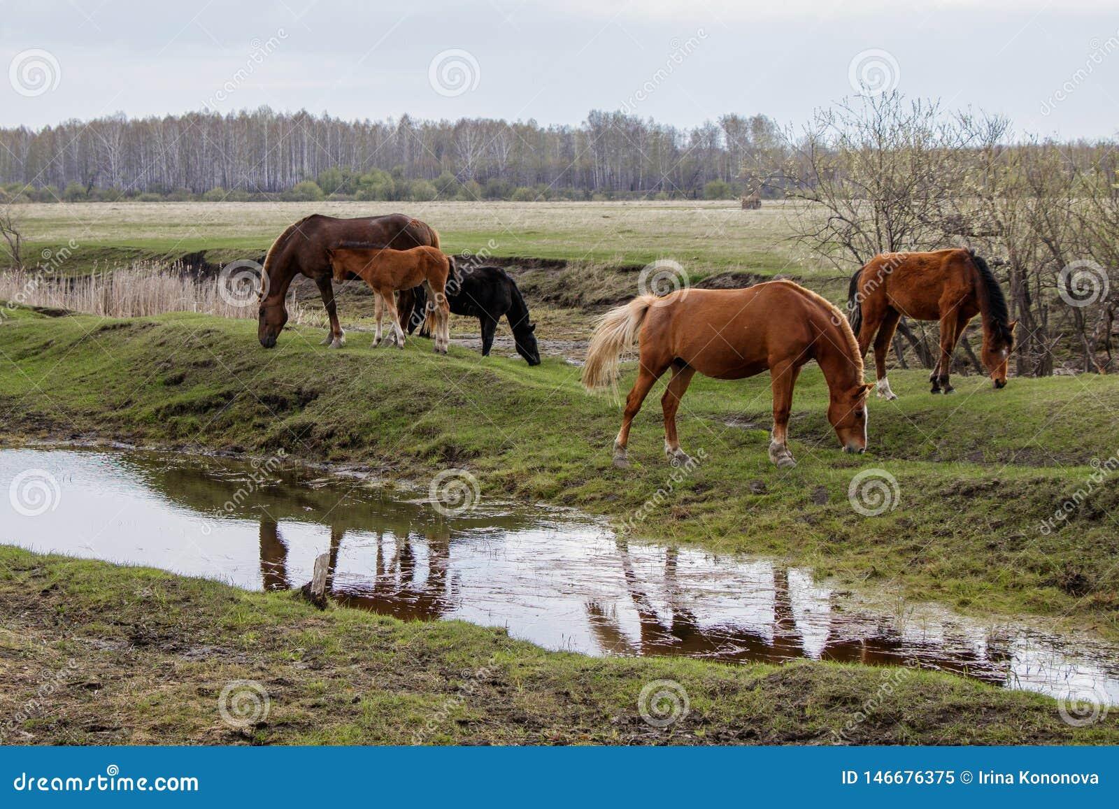Cavalos e potro que pastam no pasto