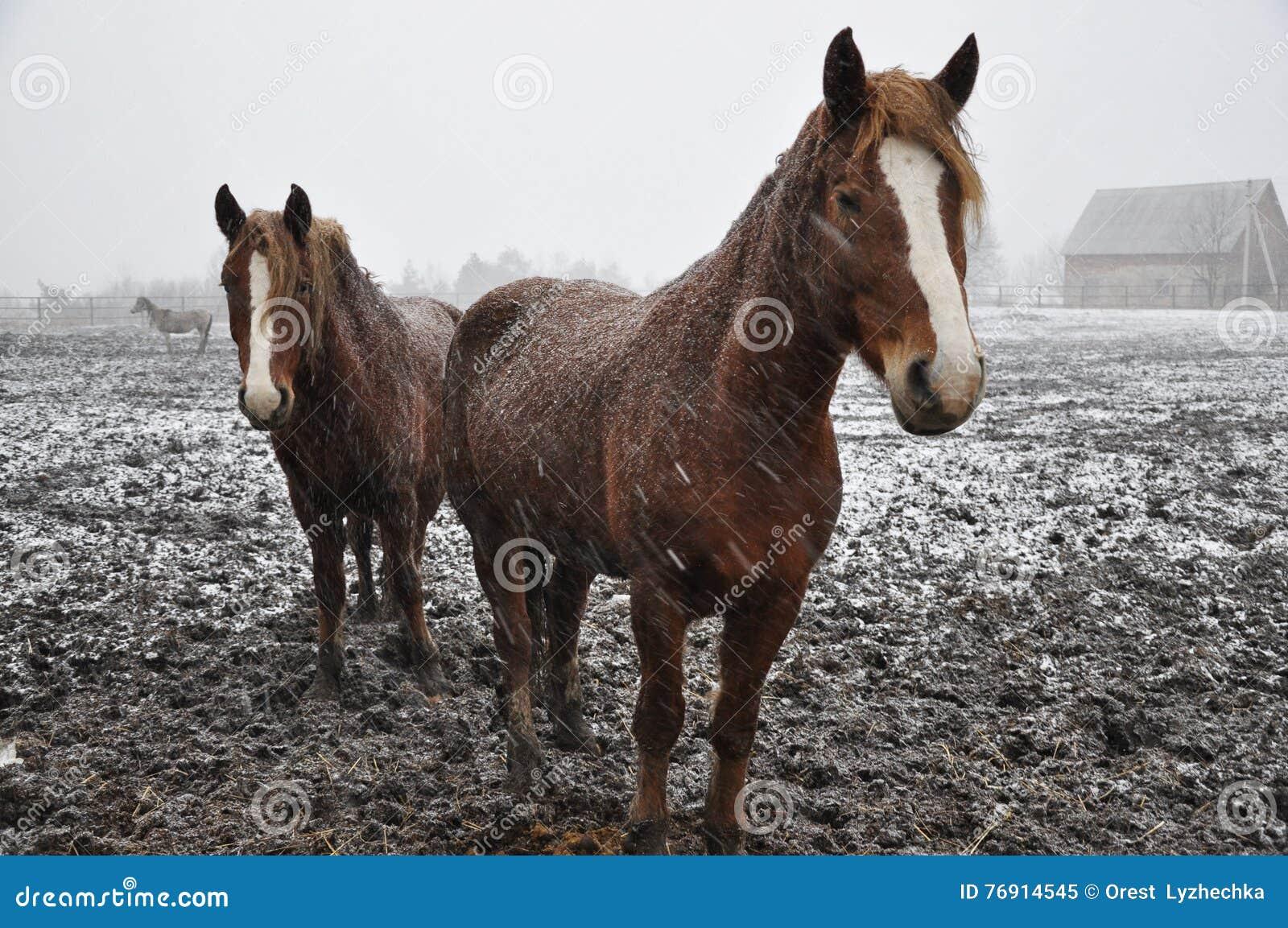 Cavalos na neve blizzard_6