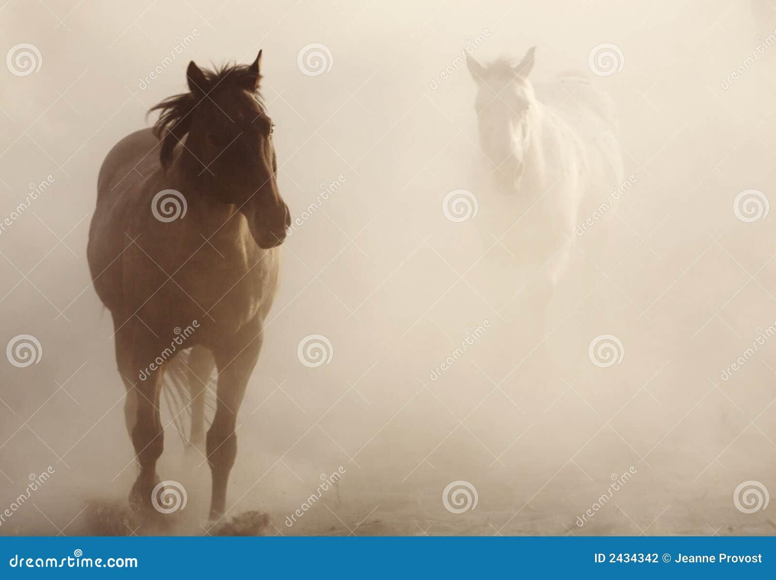 Cavalos na poeira