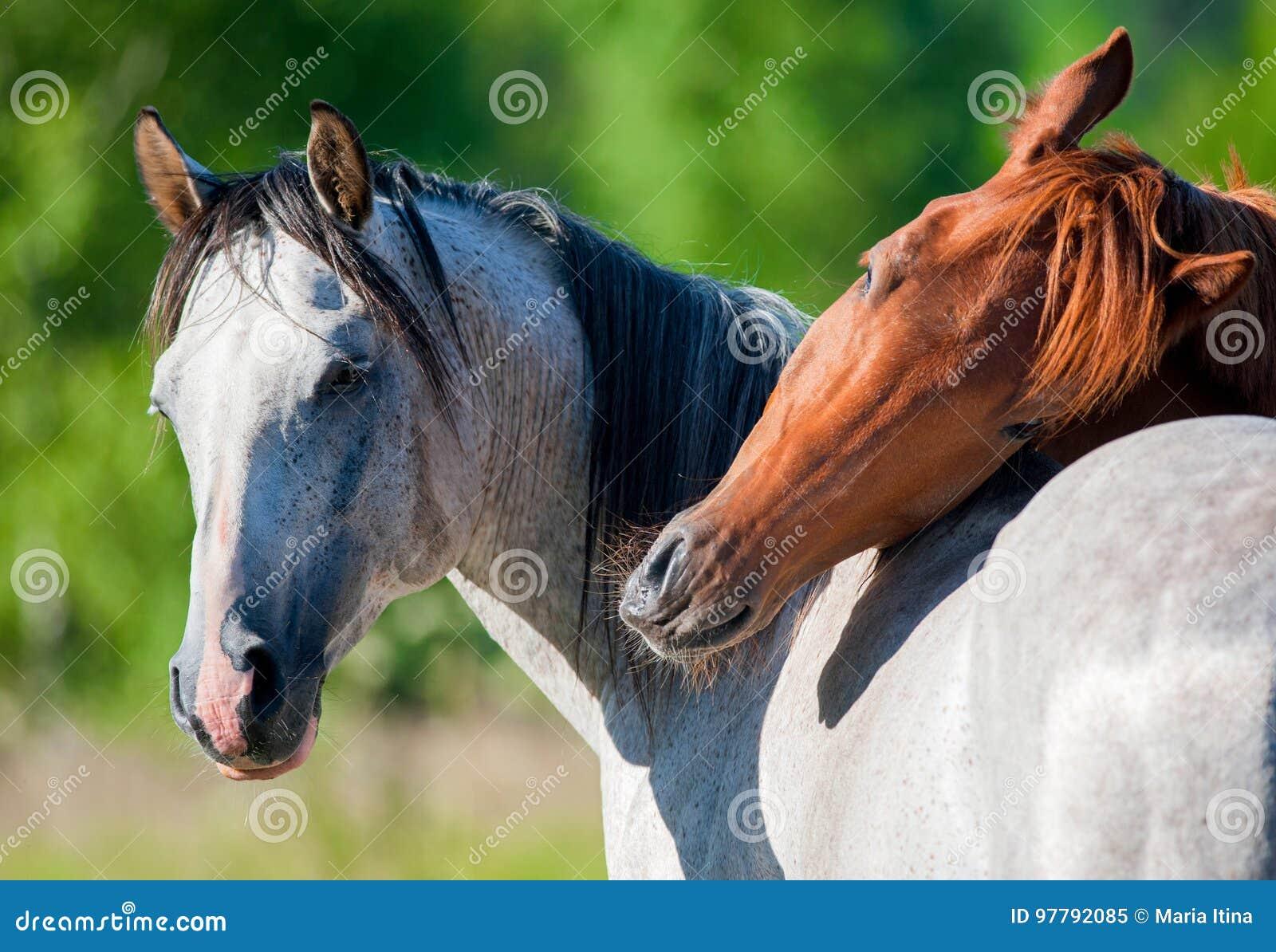 Cavalos no verão