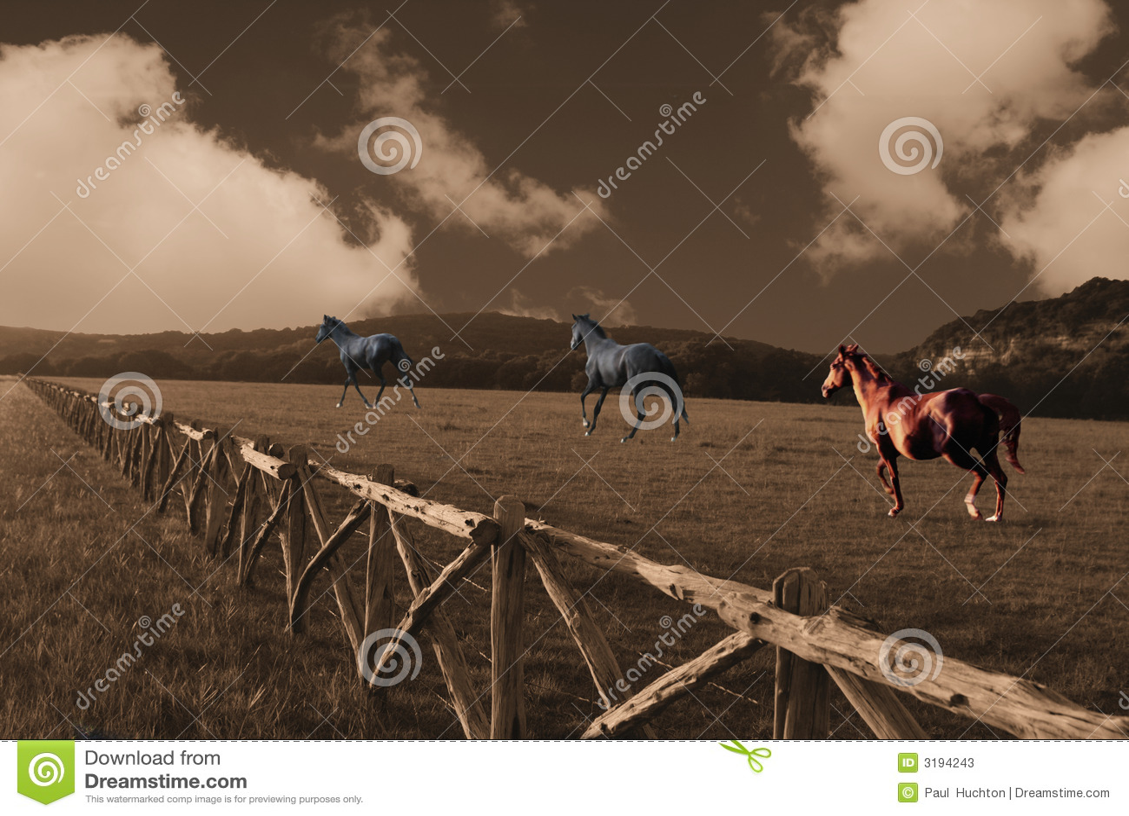 Cavalos que funcionam através de um campo