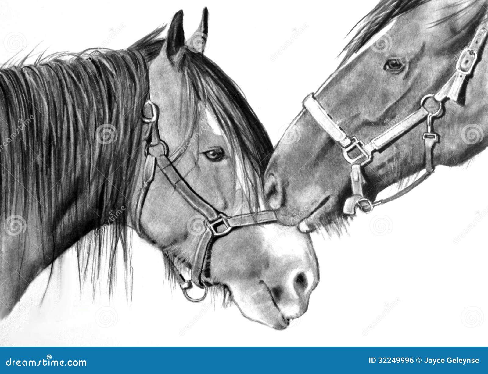 Cavalos Que Nuzzling Desenho Do Realismo Do Lapis Ilustracao